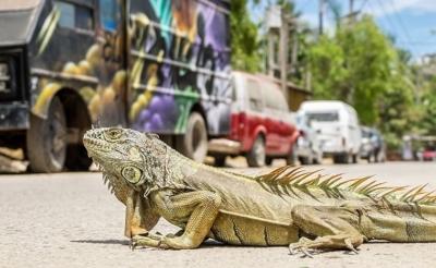 7 bonnes raisons de partir au Mexique