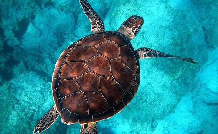 Snorkeling à Akumal dans la région du Quintana Roo