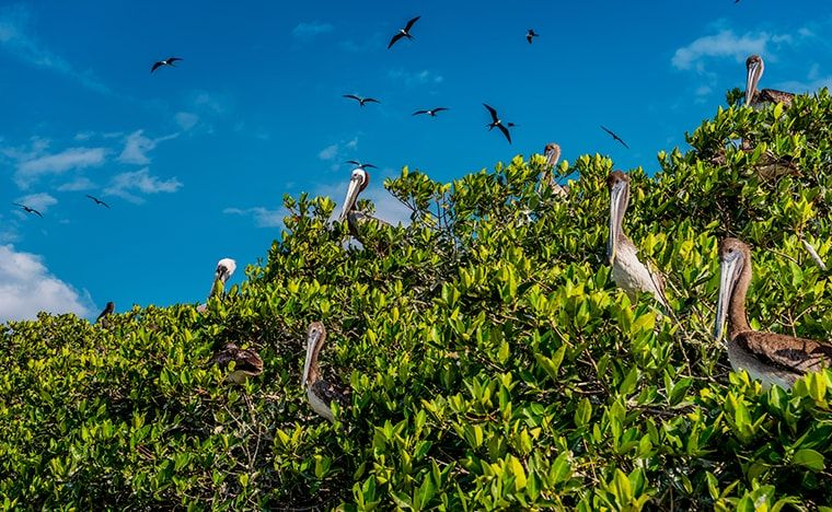 Guide voyage de Celestun - Séjour Yucatan