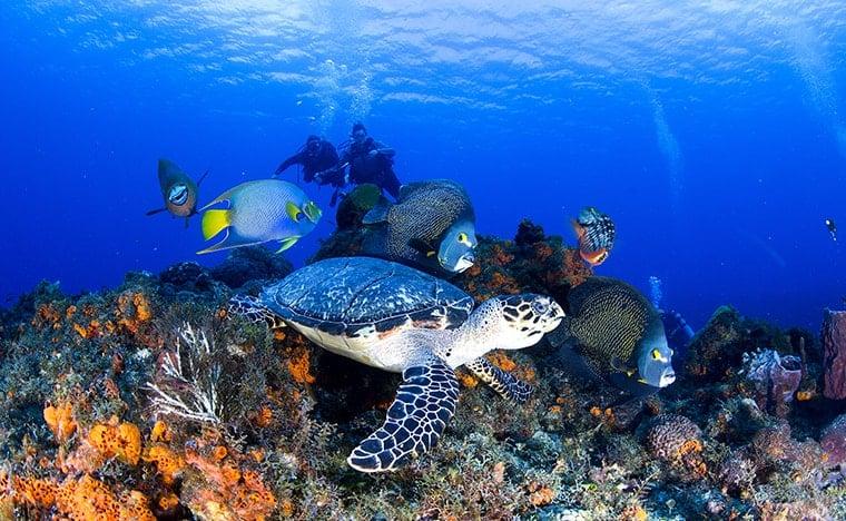 Que faire au Mexique - Snorkeling Cozumel