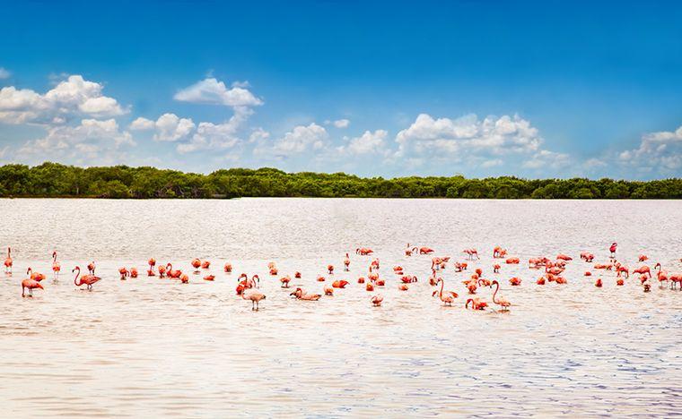 Río lagartos - Voyage au Yucatán