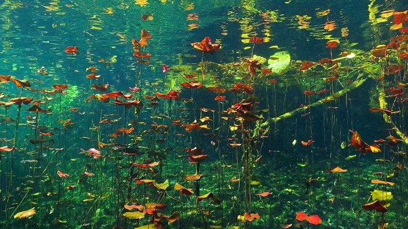 Les plus beaux cenotes du Yucatan - Carwash