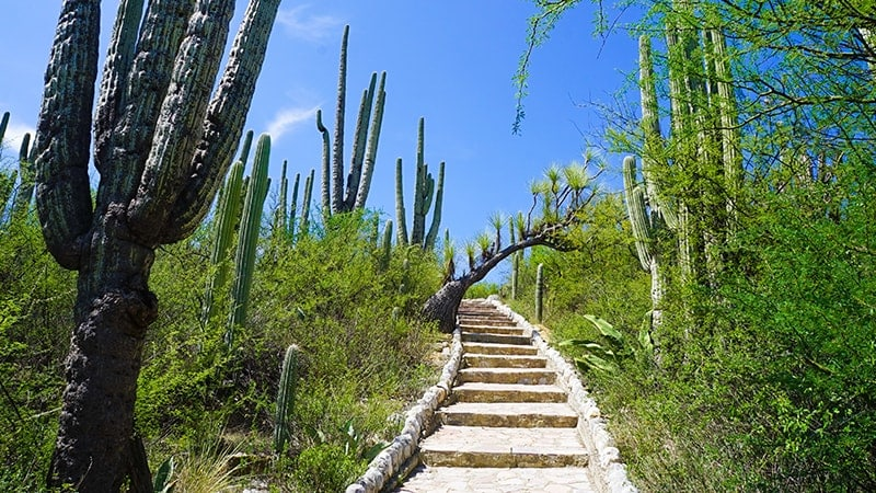 Mexique : patrimoine inscrit UNESCO - Tehuacan Cuicatlan