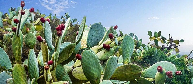 Plantes et végétaux - Mexique