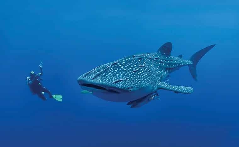 Excursion plongée et snorkeling au Yucatan
