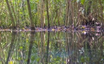 Excursion à la réserve de Sian Ka'an