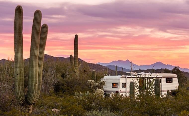 Désert du Sonora au Mexique