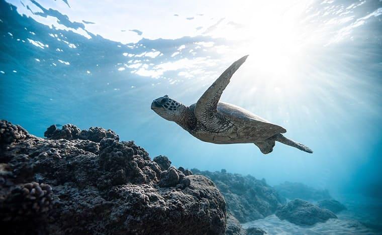 Quelles sont les tortues présentes au Mexique ?